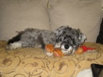 Little Bear on sofa with his teddy