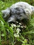 Little Bear smelling the flowers