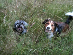 Little Bear and Molly laying in the long grass