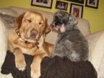 Annie & Bear in armchair