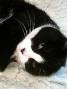 Camden Cat, Lassie in a 'purr' coat