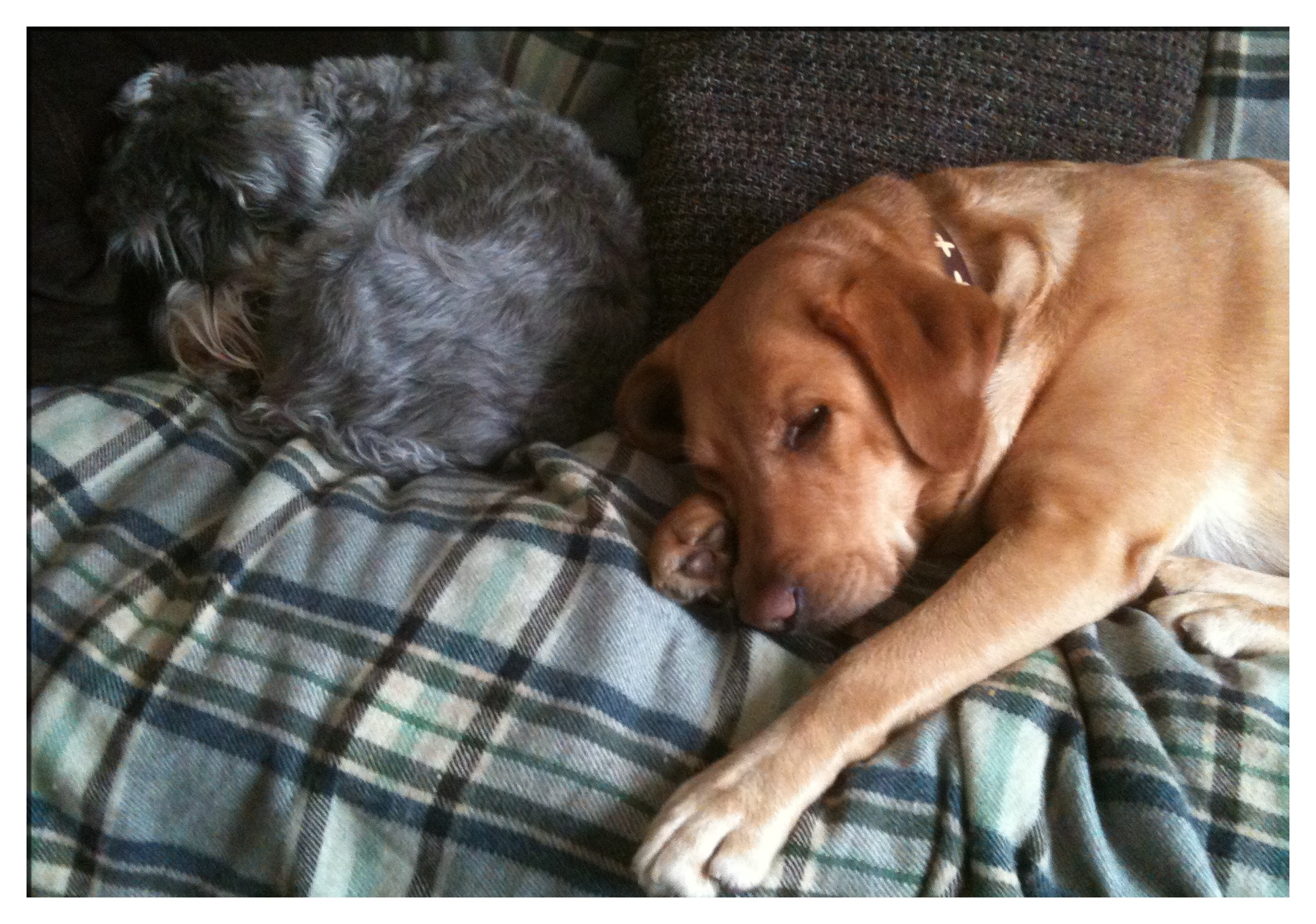 Little Bear and Annie on the sofa