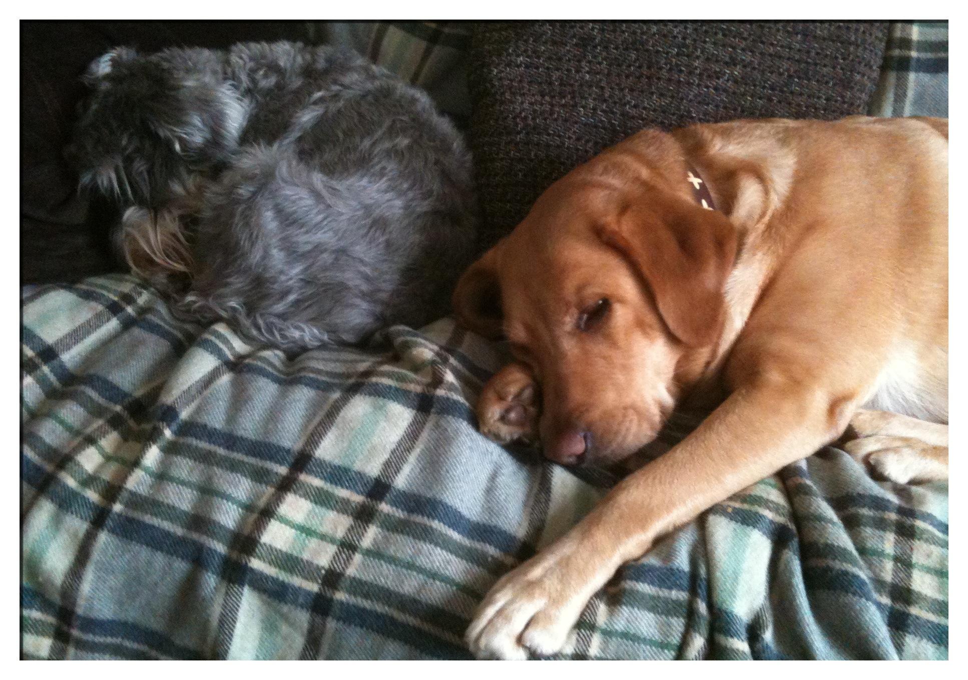 Little Bear and Annie on the sofa