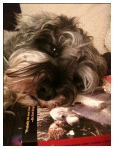 Little Bear with his head on a copy of Dogs, by Coppinger
