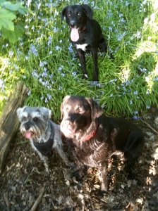 Little Bear, Paddy and Bella