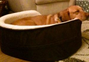 Annie in her beloved bed