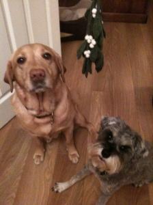 Annie & Bear under the (fake) mistletoe