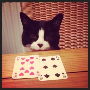 Camden Cat
