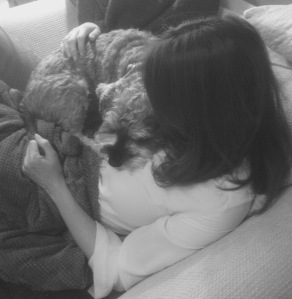 Mini Schnauzer curled up on the writer's chest