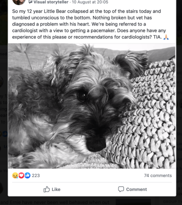 Screen shot of Facebook post asking for help for a sad looking Mini Schnauzer